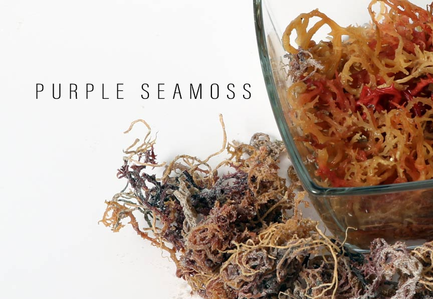 mamsia-purple-sea-moss