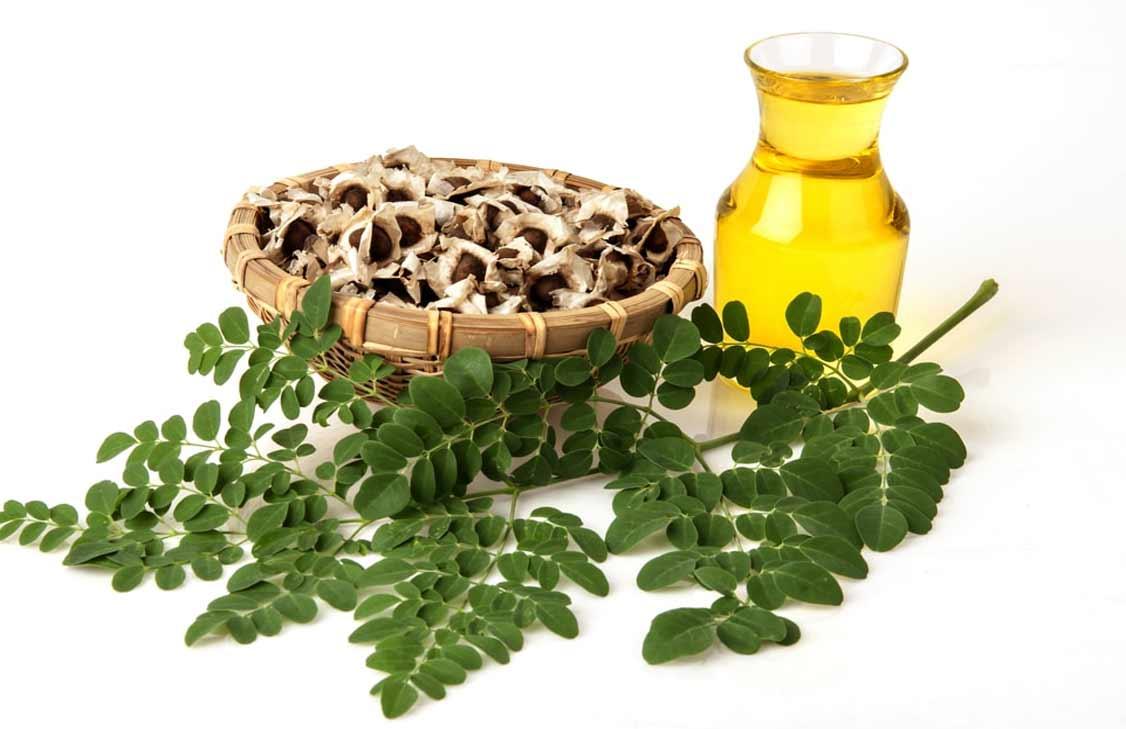 moringa oil for hair